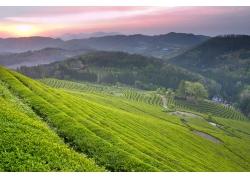 大山中的春色风景图片