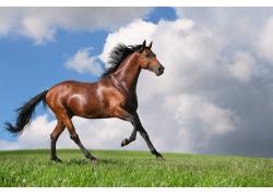 草原上奔跑的骏马