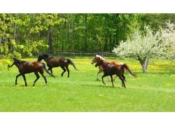 草原绿地上的马匹摄影