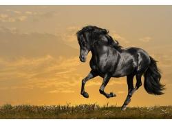 草原上奔跑的一匹马