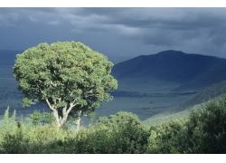 树木风光美景摄影图片