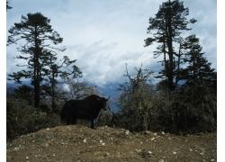 蓝天白云生态风光图片