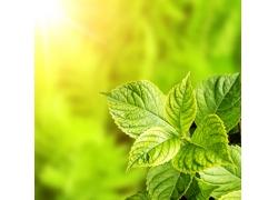 绿叶实用背景