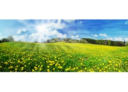 蓝天白云下的草地美景图片