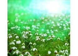 美丽的春天鲜花背景图片