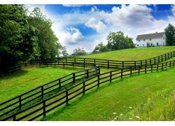 蓝天白云下的春天草地风景图片