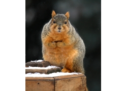 木桩上的可爱小松鼠