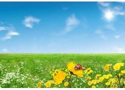 唯美春天花丛风景