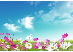 春天时的美丽鲜花图片