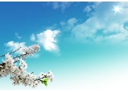 春天的梨花图片