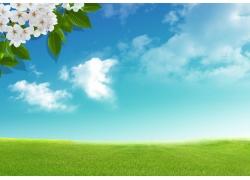 春天时的蓝天草地图片
