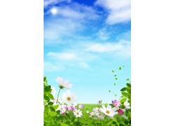 春天花朵盛开
