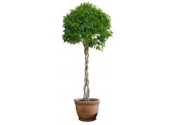 植物盆栽psd素材38
