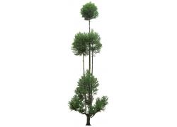 园林树psd素材38