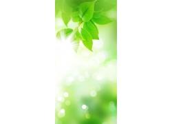 绿色清新排版背景