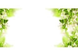 树枝花朵实用展板背景