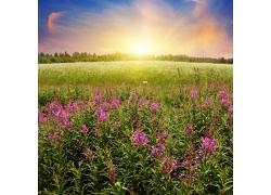 夏天日落风景图片