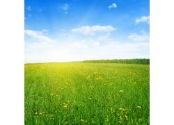 夏天草原风景图片