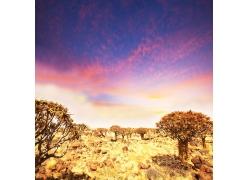 非洲平原风景图片