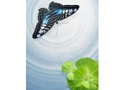 蝴蝶与水纹背景图片