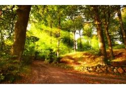 秋天森林风景图片