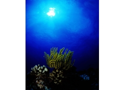 海底植物摄影图片图片