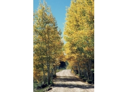 秋天景象摄影图片