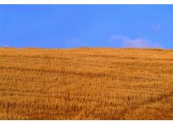 秋天风景摄影图片