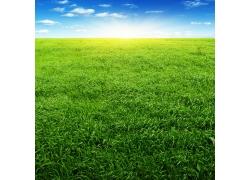 绿油油的草地