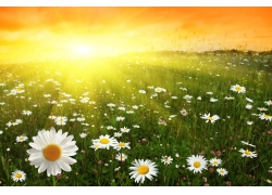 夕阳下的花朵