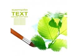 绿色叶子写真与画笔