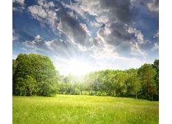 春天森林风景图片