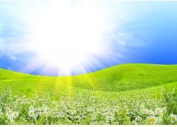 绿色风景 花海图片