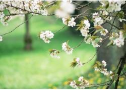 春天桃花实用背景