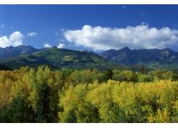 高山森林风景摄影图片
