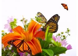 飞舞的蝴蝶与花特写图片