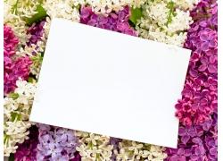 放在丁香花上的白纸