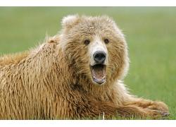 可爱小熊摄影