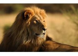 回望的狮子