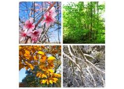 四季景色图片