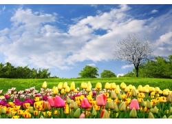 蓝天白云与鲜花草地