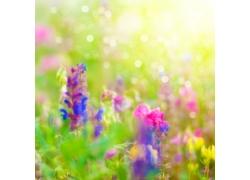 美丽鲜花梦幻背景