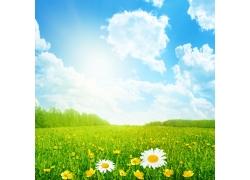 蓝天和草地