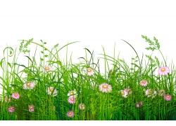 春天绿草鲜花