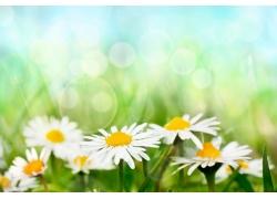 美丽鲜花背景