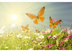 美丽鲜花与蝴蝶
