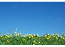 蓝天下的草地