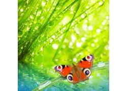 美丽蝴蝶与绿色背景