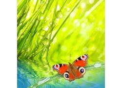 绿色清新背景与蝴蝶