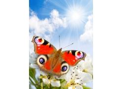 美丽蝴蝶与鲜花背景
